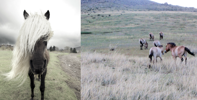 mountain ponies for texture & yarn inspiration